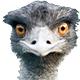 : ostrich: